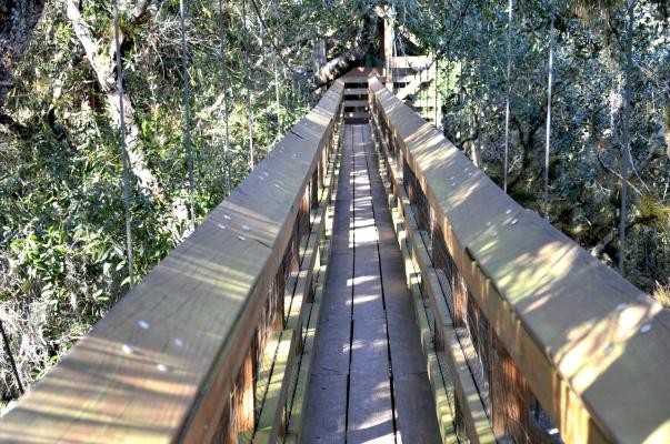 myakka state park